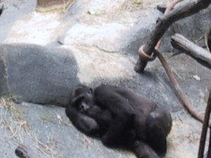 Mama Gorilla and baby